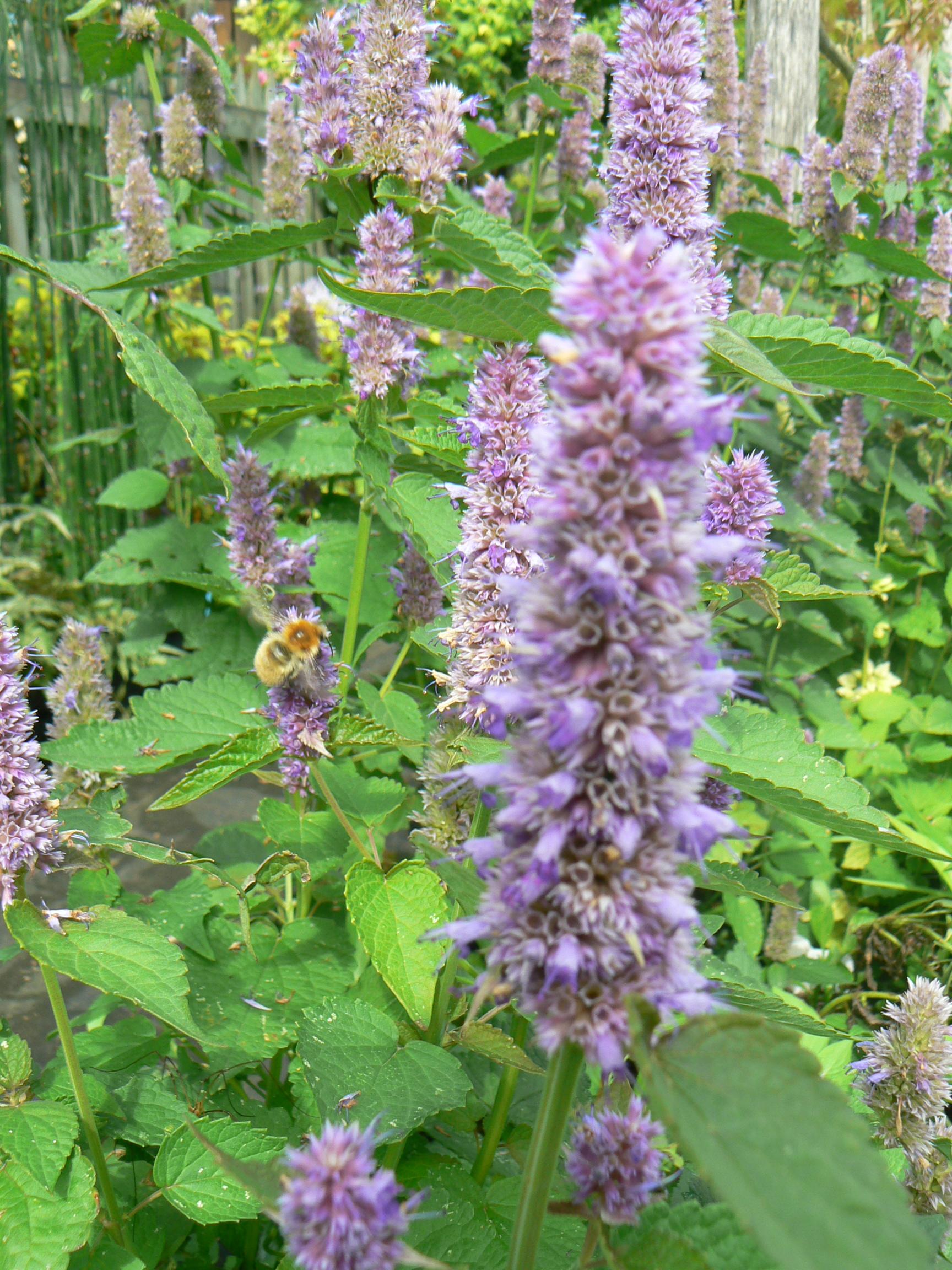 fleurs comestibles attirent les abeilles