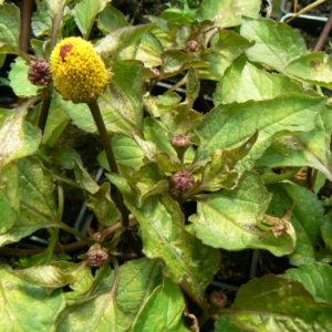 jardin bio aromatique bio