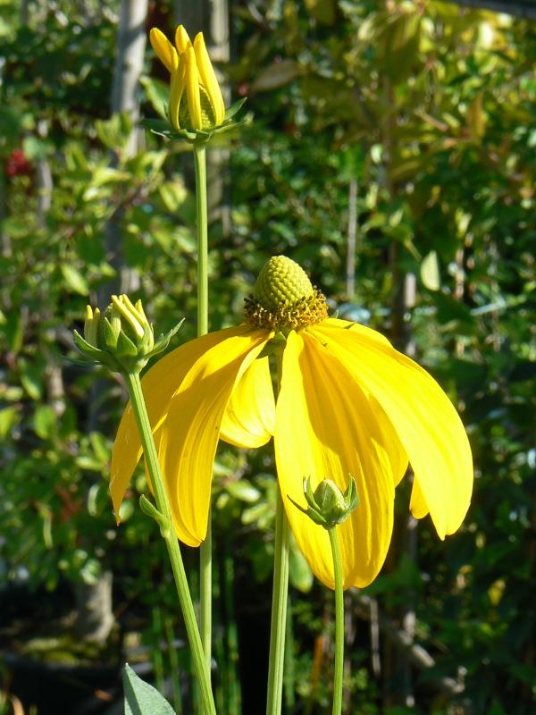 Vivaces Bio Floraison estivale de Juillet à Septembre