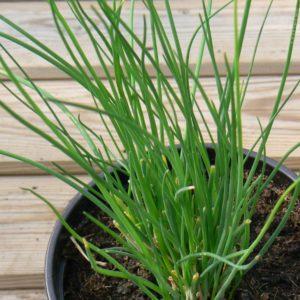 Fines herbes Bio