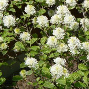 Arbustes Bio floraison ou fructification de printemps d'avril à juin