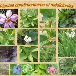 Liste des aromatiques Bio