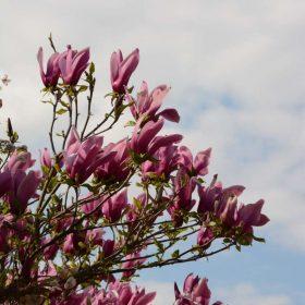 Les Jardins d'Ollivier, pépinière bio