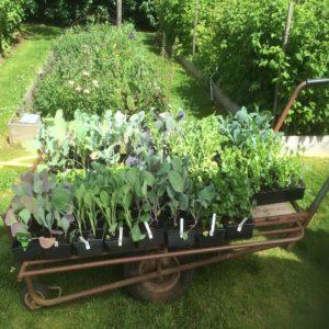 Plant de légumes bio de saison