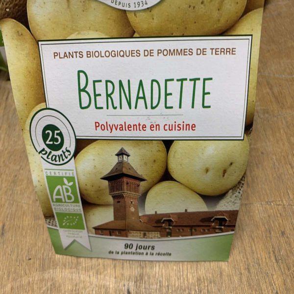 pomme de terre Bernadette bio