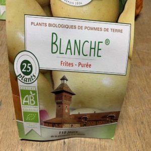 Pomme de terre blanche Bio