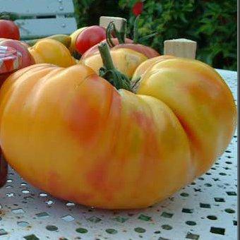 Tomate orange Ananas bio