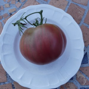 tomate coeur de boeuf Anna Russe