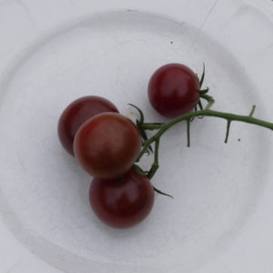 tomate cerise bio brown berry