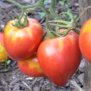 petite coeur boeuf bio ou tomate rein red bio