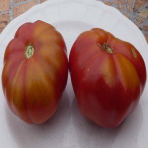 tomate cotelée d'olmet bio