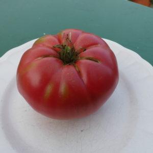 tomate bio grosse du cher
