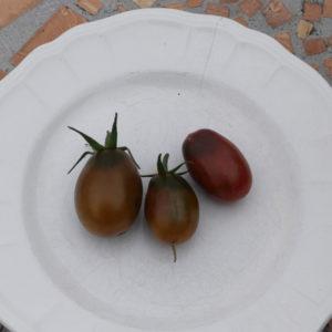 tomate cerise prune noir bio