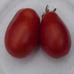 tomate bio roma