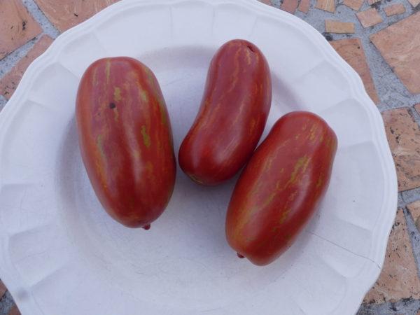 tomate romaine mouchetee